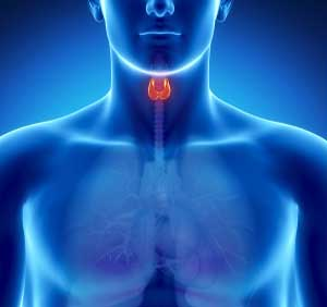 Hypothyroidism in Pinellas Park, FL